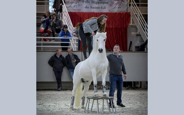 poneys-sous-les-pommiers-2017