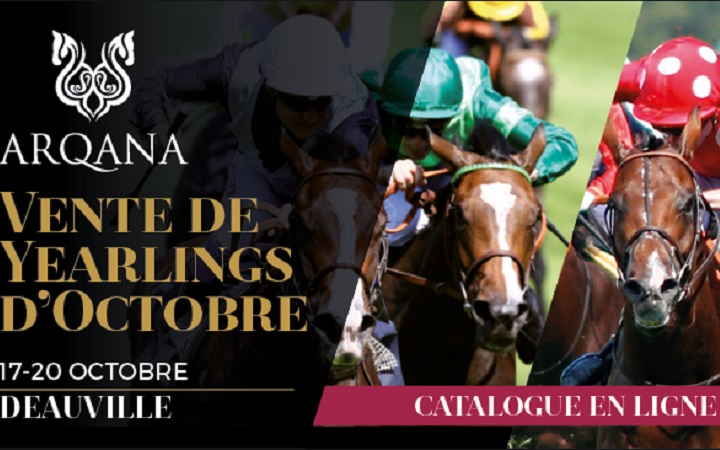 vente-yearlings-octobre-2017-deauville