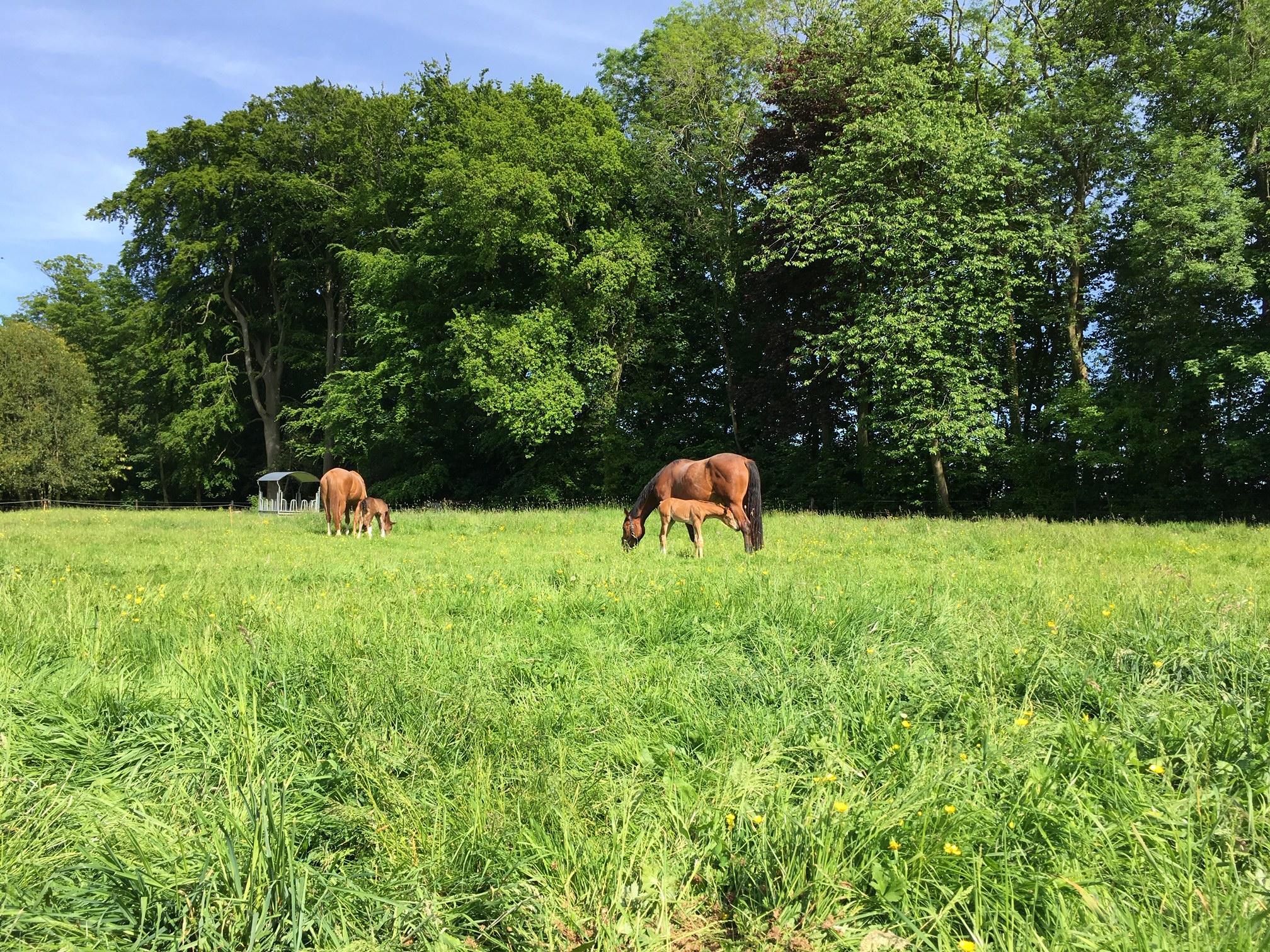 L'élevage de Marion Roujolle vient d'être labellisé EquuRES à l'échelon Engagement