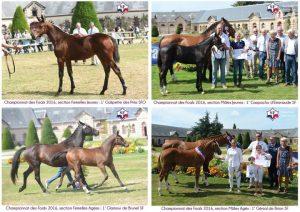 Championnat des Foals