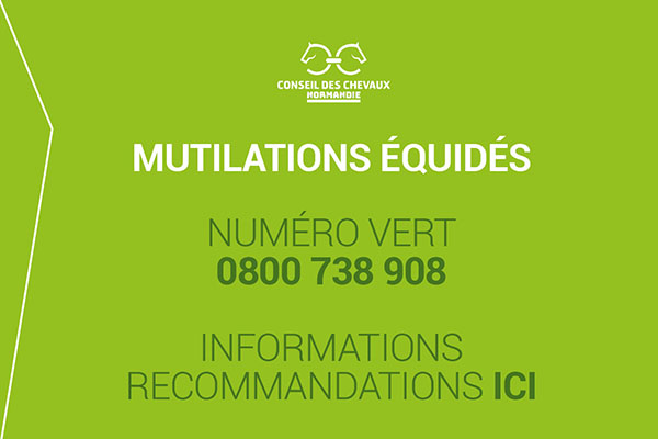 Image popup mutilation chevaux
